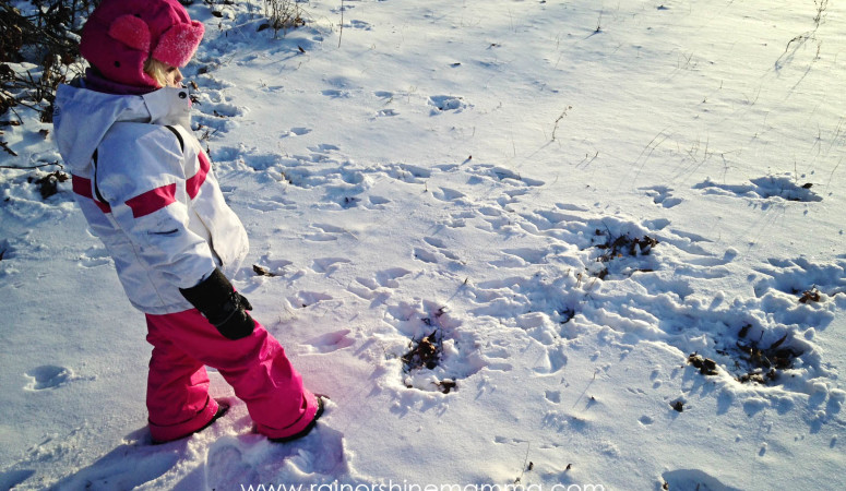 Animal Tracking with Children: A Beginner's Guide