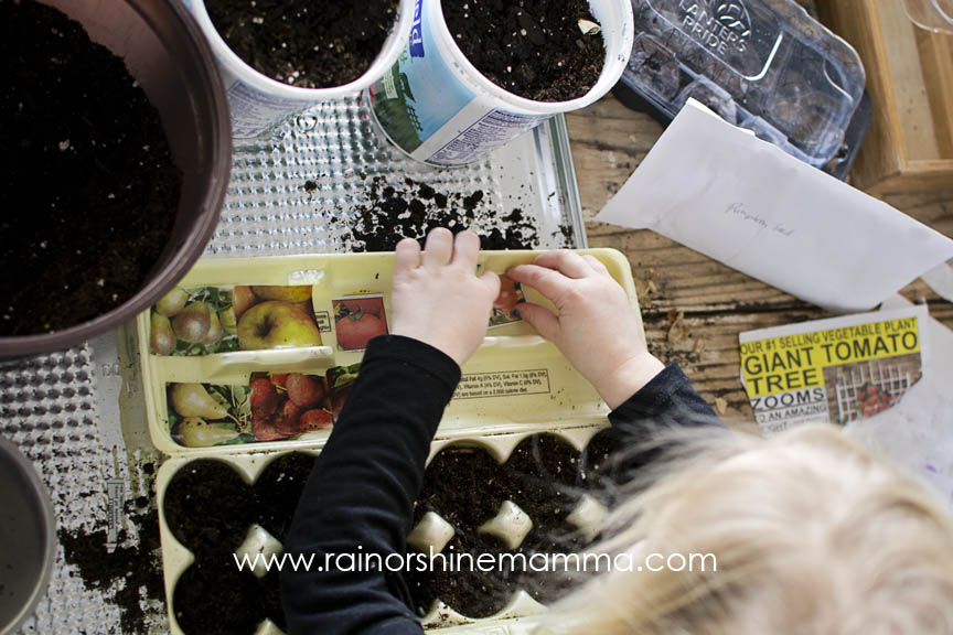 Planting tomatoes, pumpkins and other seeds.