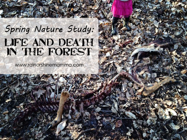 Spring Nature Study: Life and Death in the Forest. Rain or Shine Mamma