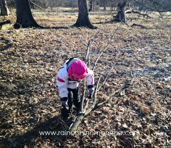 Collecting sticks for a den. Rain or Shine Mamma