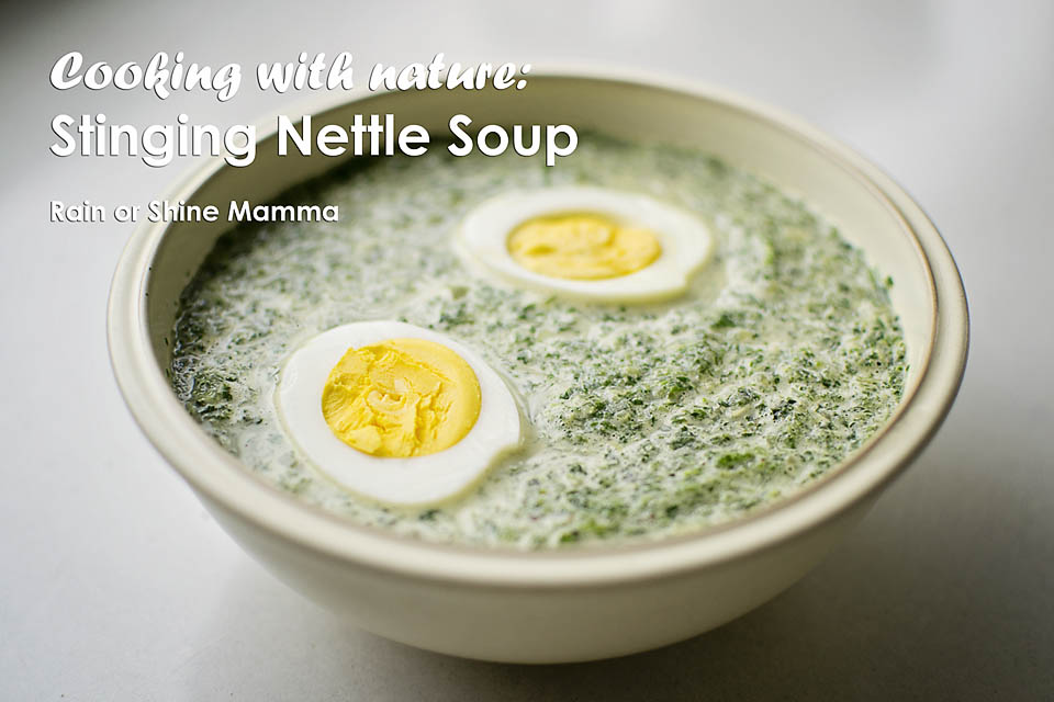 Cooking with nature: Stinging nettle soup recipe. Rain or Shine Mamma