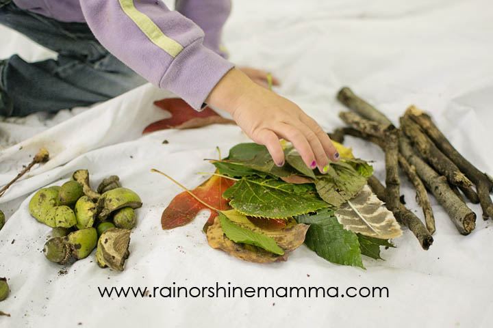 DIY Forest School: Sorting, Comparing and Categorizing. Rain or Shine Mamma