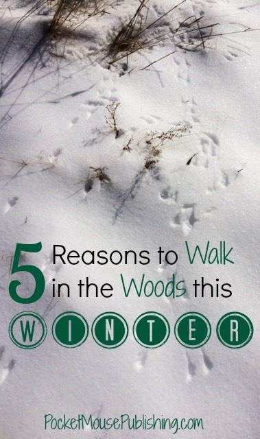 5-reasons-to-walk-in-the-woods