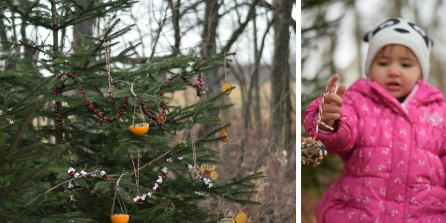 10 Ways to Get Outdoors During the Holidays - Decorate an Edible Tree for Wildlife