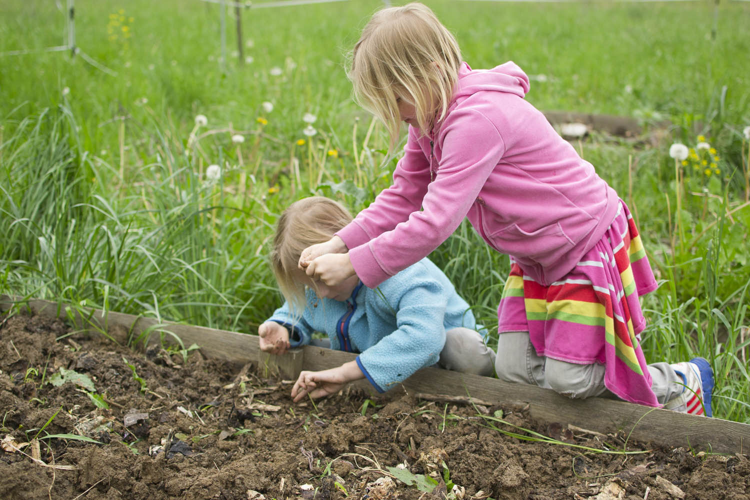 5 common mistakes when gardening with kids and how to fix for Gardening with children