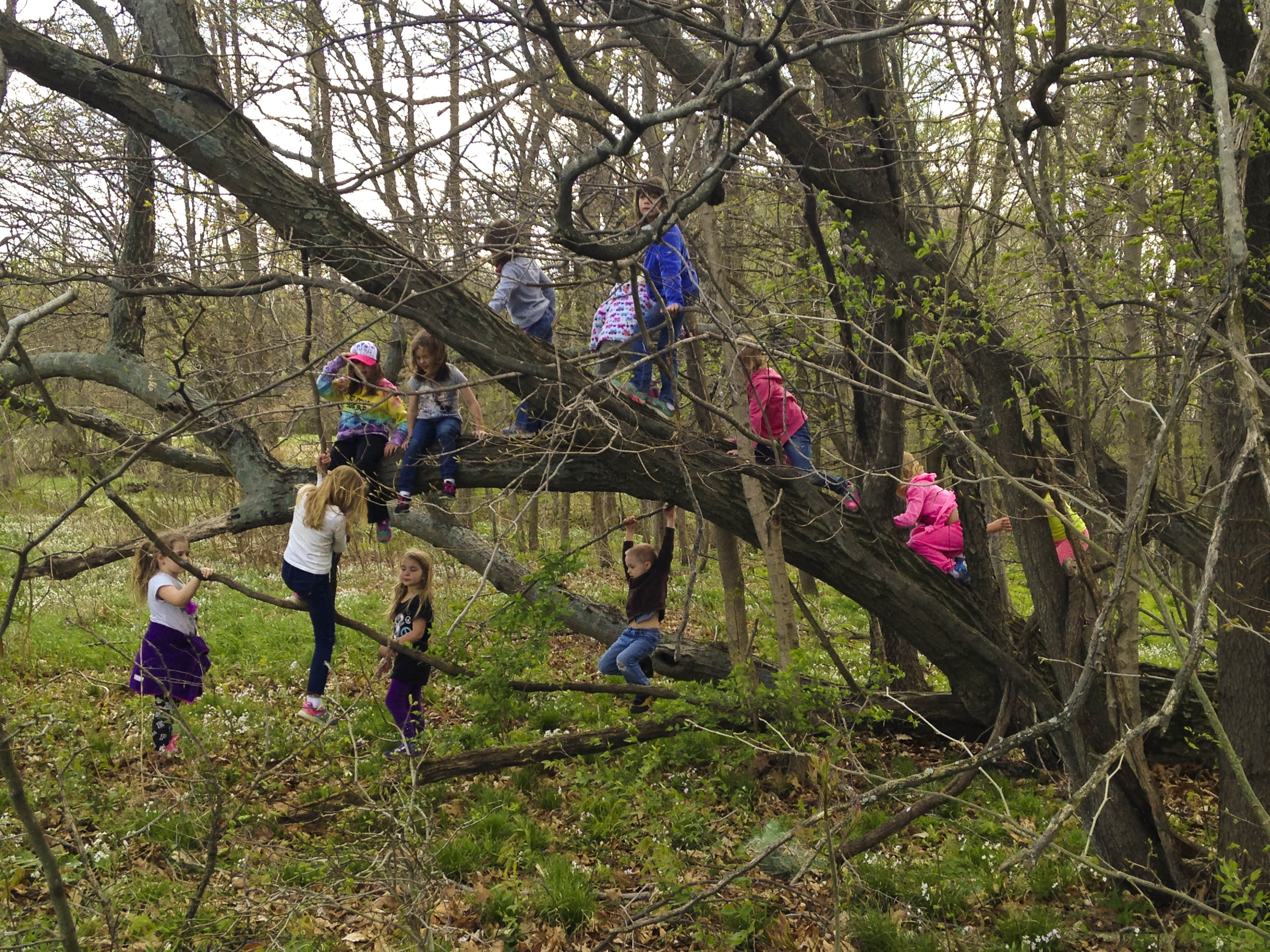 The Unsafe Child Less Outdoor Play Is >> Parents Stop Worrying And Let Your Child Climb Trees