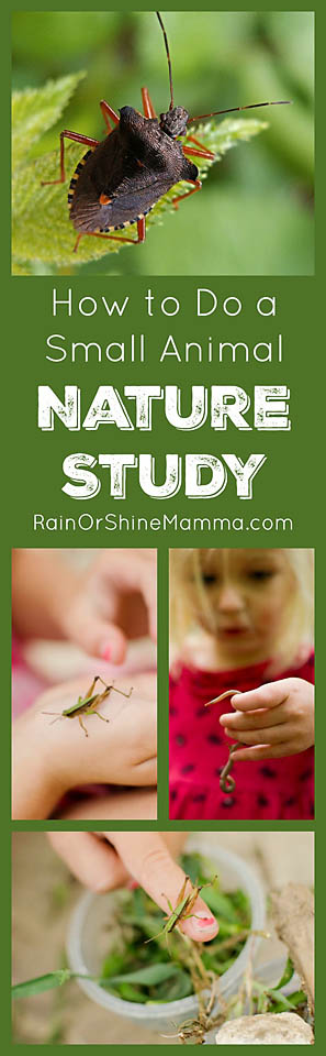 How to Do a Small Animal Nature Study. Nature activities for preschoolers and kindergarteners. Rain or Shine Mamma.