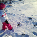 Animal Tracking with Your Child: A Beginner's Guide. Rain or Shine Mamma blog