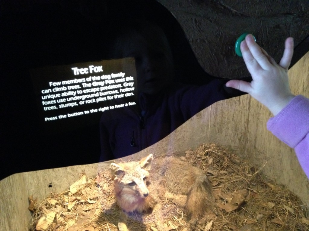 What Does the Fox Say? Lessons from a Nature Center. https://rainorshinemamma.com