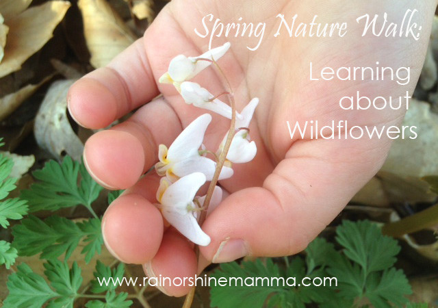 Spring Nature Walk: Learning about Wildflowers
