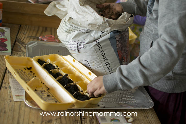 Filling the Egg Carton Seed Starter with Potting Soil. Rain or Shine Mamma