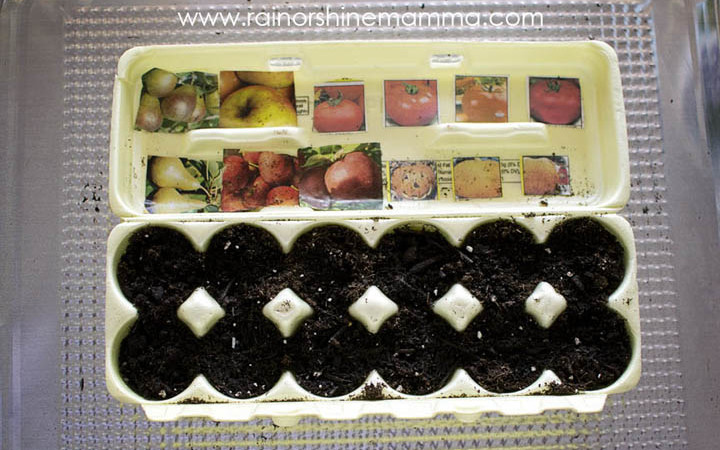 The Ultimate Egg Carton Seed Starter for Kids