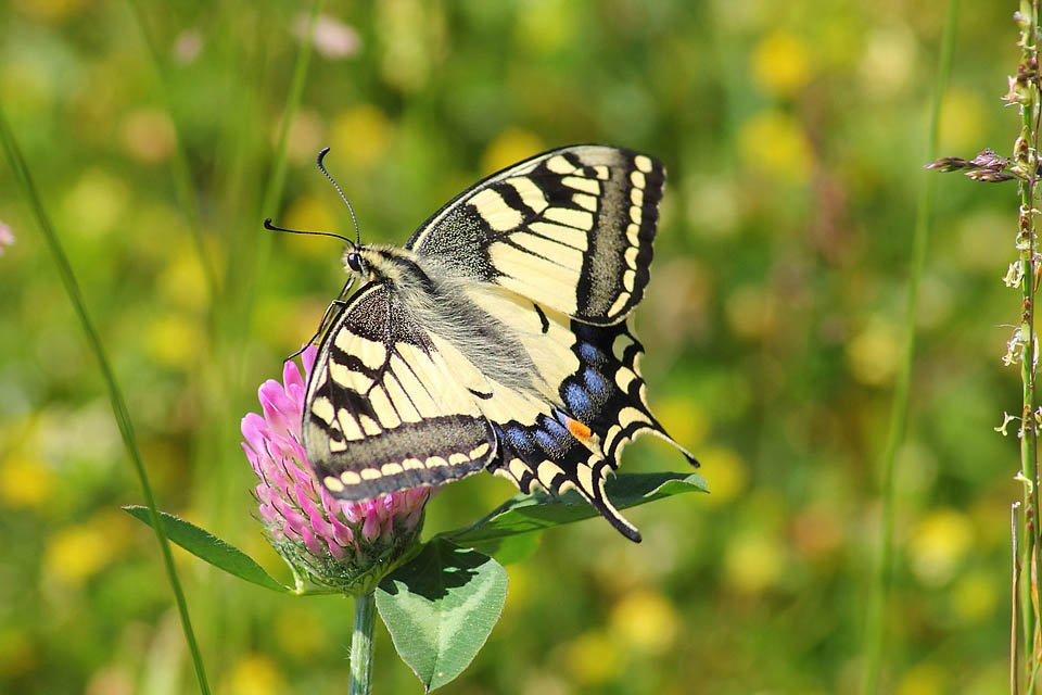 Three Fun and Educational Butterfly Projects for Kids. From butterfly gardens to citizen science, these fun butterfly activities are bound to be a hit with the kiddos!