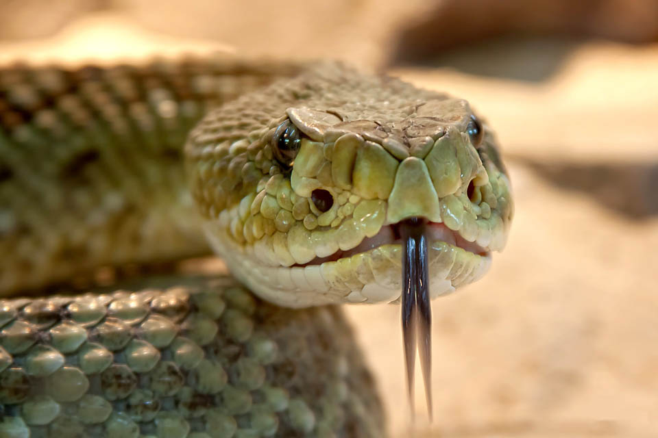 How to Prevent and Protect Children from a Snakebite. How can you tell if a snake is venomous? How do you prevent children from being bitten by a snake? How should you respond if they are bitten? Great snake bite prevention and treatment tips from an outdoor expert. Rain or Shine Mamma.