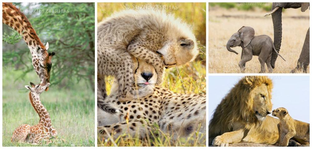 Baby Safari Animal Prints. 2017 Holiday Gift Guide for Outdoorsy Kids. Rain or Shine Mamma