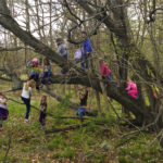 Let Them Climb Trees! The many benefits of tree climbing for kids. Don't miss these tips for staying safe while climbing trees! Rain or Shine Mamma
