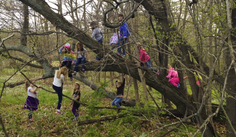 Parents – Stop Worrying and Let Your Children Climb Trees!